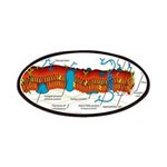 Cell Membrane Patches