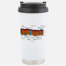Cell Membrane Stainless Steel Travel Mug