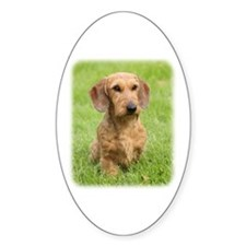 Dachshund 9Y426D-207 Decal