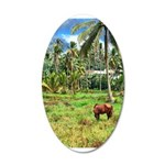 Horse in a Tropical Pasture 38.5 x 24.5 Oval Wall