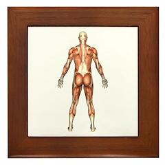 Visible Man Back Framed Tile