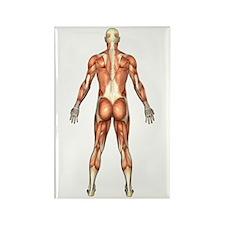 Visible Man Back Rectangle Magnet