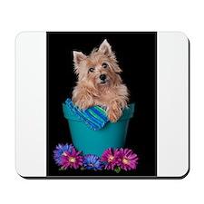 Cairn Terrier Bloom Mousepad