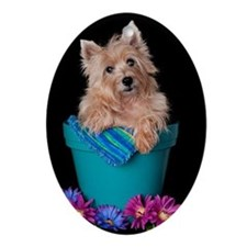 Cairn Terrier Bloom Ornament (Oval)
