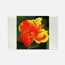 Red & Yellow Hibiscus Rectangle Magnet