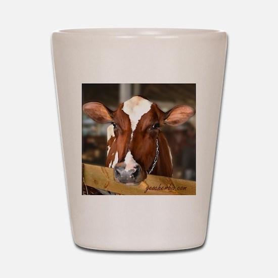 Cow 1 Shot Glass