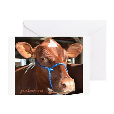 Cow 2 Greeting Cards (Pk of 20)