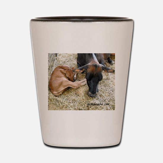 Unique Hereford cattle Shot Glass