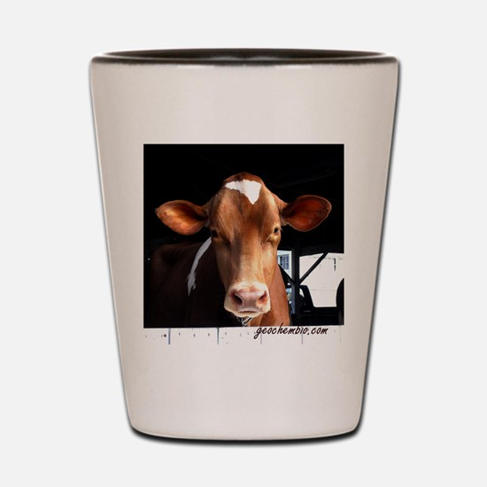 Cute Hereford cattle Shot Glass