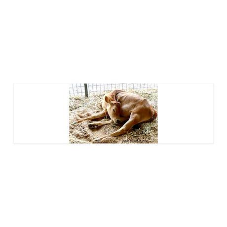 Sleeping calf 42x14 Wall Peel