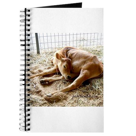 Sleeping calf Journal