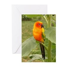 Funny Conure Greeting Cards (Pk of 10)
