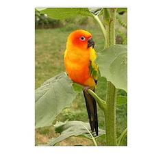 Unique Parrot Postcards (Package of 8)