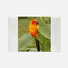 Cute Tropical birds Rectangle Magnet
