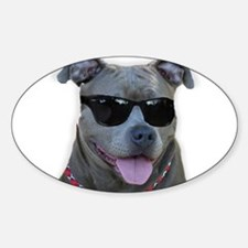 Pitbull in sunglasses Decal