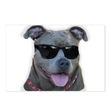Pitbull in sunglasses Postcards (Package of 8)