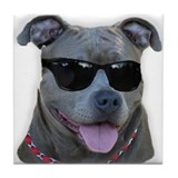 American pitbull terrier Coasters