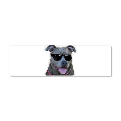 Pitbull in sunglasses Car Magnet 10 x 3