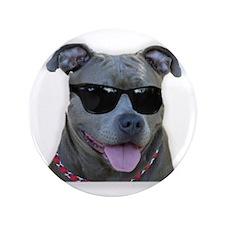 "Pitbull in sunglasses 3.5"" Button (100 pack)"