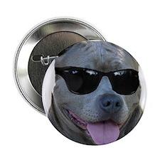 "Pitbull in sunglasses 2.25"" Button (100 pack)"