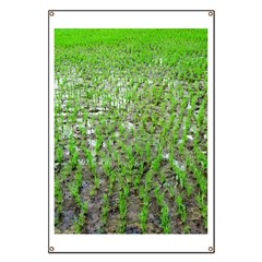 Freshly Planted Rice Banner