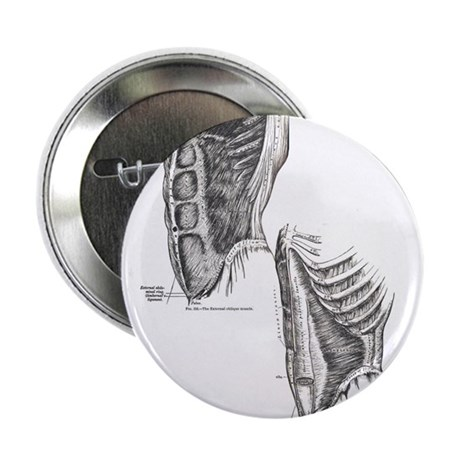"Muscles of the abdomen 2.25"" Button (100 pack)"