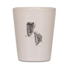 Muscles of the abdomen Shot Glass