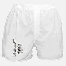 spine Boxer Shorts