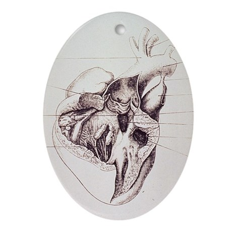 heart anatomy Ornament (Oval)