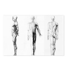 full body anatomy Postcards (Package of 8)