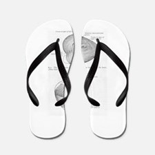 Grays Anatomy heart Flip Flops