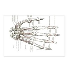 hand anatomy Postcards (Package of 8)