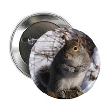 Gray squirrel Button