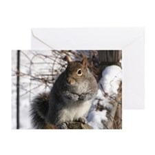 Gray squirrel Greeting Cards (Pk of 10)
