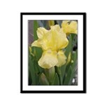 Yellow iris Framed Panel Print