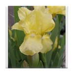 Yellow iris Tile Coaster