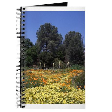 California Wildflower Journal