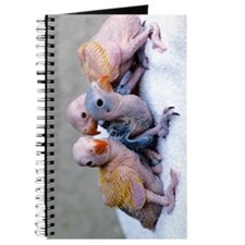 Baby Ringnecks Journal