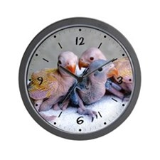 Baby Ringnecks Wall Clock