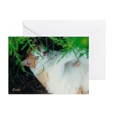 Zuke's Hideout Greeting Cards (Pk of 10)