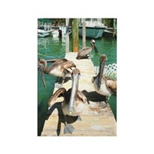 Brown Pelicans Rectangle Magnet
