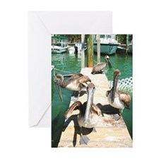 Brown Pelicans Greeting Cards (Pk of 10)