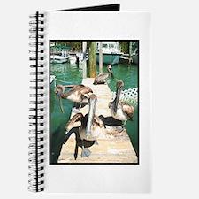 Brown Pelicans Journal