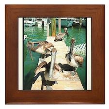 Brown Pelicans Framed Tile