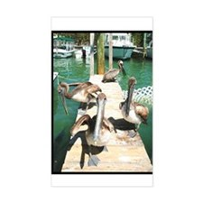 Brown Pelicans Rectangle Decal