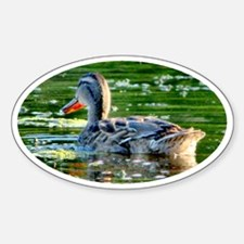 Mallard Duck - Decal