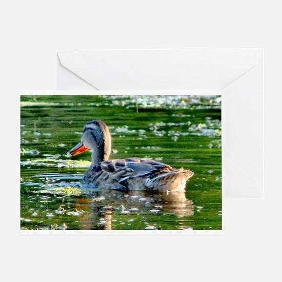 Mallard Duck - Greeting Card