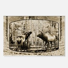 Bull elk face off Postcards (Package of 8)