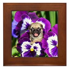 Pug in Pansies Framed Tile