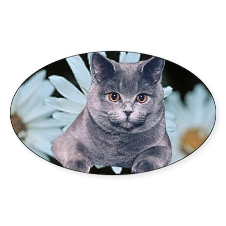 British Blue Shorthair Sticker